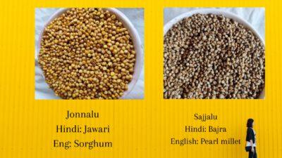 Sorghum Pearl millet